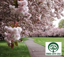 Cherry Blossoms and Tree City USA logo