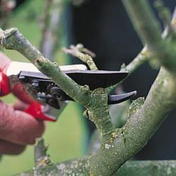 Making a proper pruning cut on a tree branch