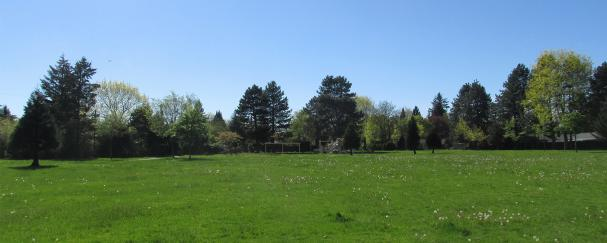 Grassy field at Carl Gustafson Park in Vancouver, Washington
