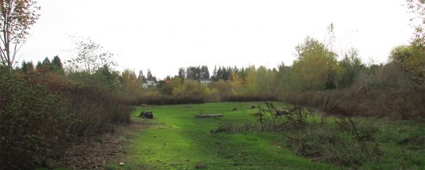 Part of Meadbrook Marsh accessed from the Burnt Bridge Creek Trail