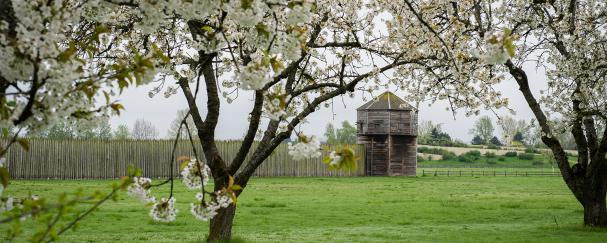 Apple tree blossums outside Fort Vancouver National Historic Site
