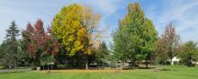 Fall trees beginning to turn at South Cliff Park in Vancouver, Washington