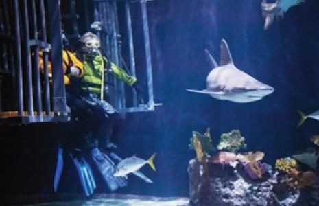 Fish tank with diver and shark.