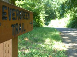 Evergreen Trail at Columbia Springs