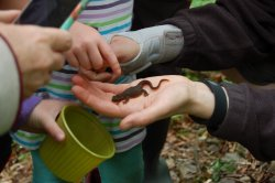 Critter Count participants discover a newt